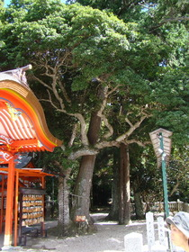 2013-09・26 塩田八幡宮 (42).JPG